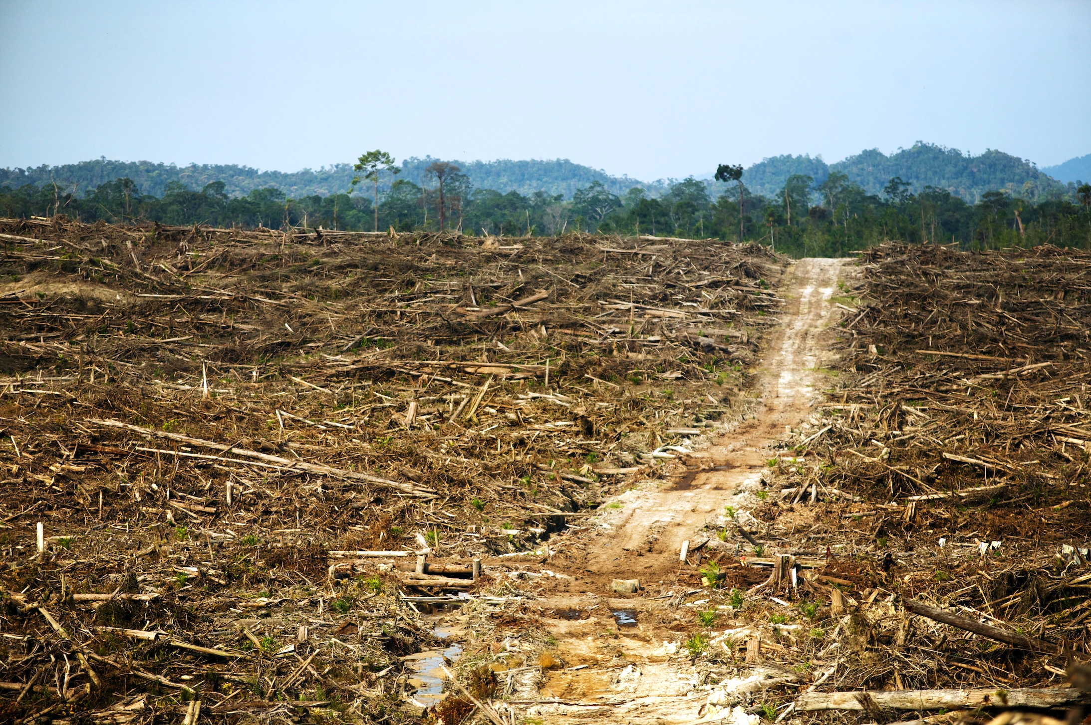 Effects of Deforestation in Borneo - Deck Up
